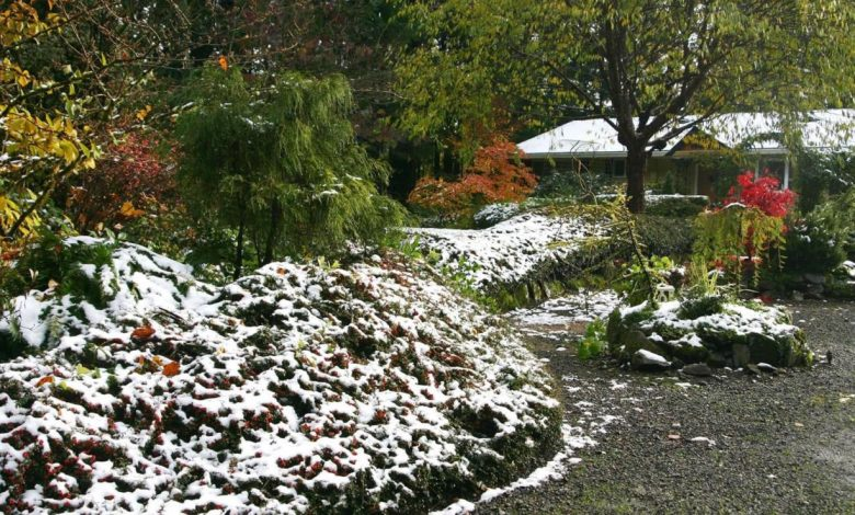Photo of How to Tackle Your Garden Before Winter Arrives